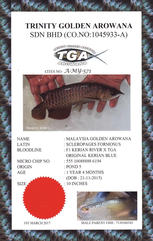 TGA-Cert-1.jpg (750×1179)