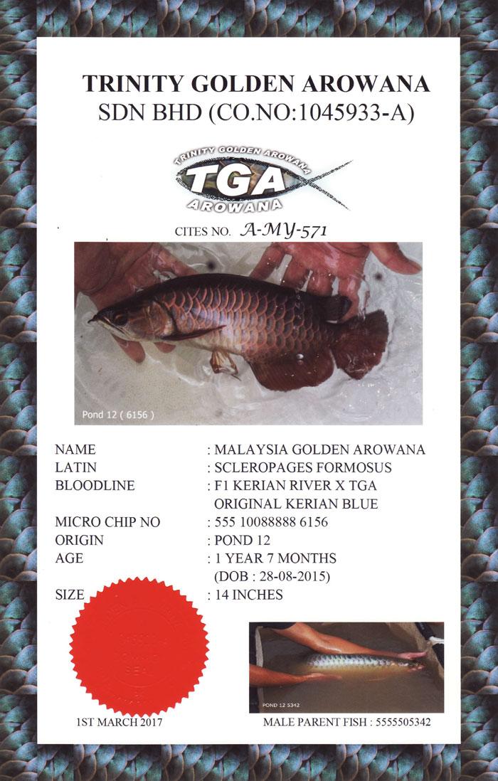 TGA-Cert-2.jpg (700×1098)