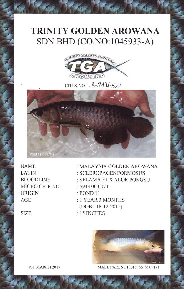 TGA-Cert-3.jpg (700×1098)